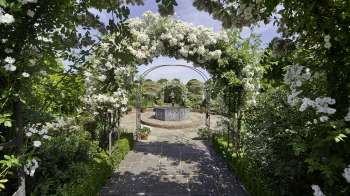 Rose Arches in the White Garden